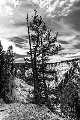 Photograph - Grand Canyon Of The Yellowstone Bw by Mel Steinhauer
