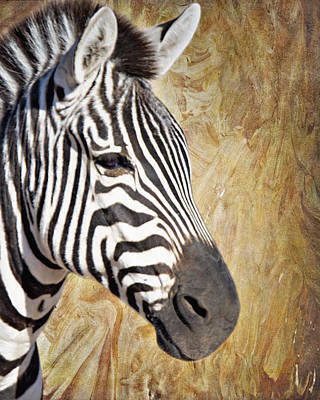 Grant's Zebra_a1 Art Print