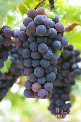 Grapes On The Vine Art Print by Tim Gainey