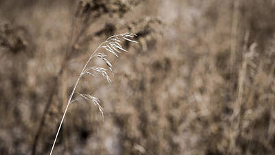Photograph - Grass Blade by Steven Ralser
