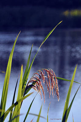 Photograph - Grass Feathers by Kay Lovingood