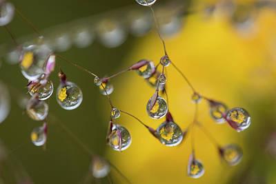 Photograph - Grass Inflorescence by Robert Potts
