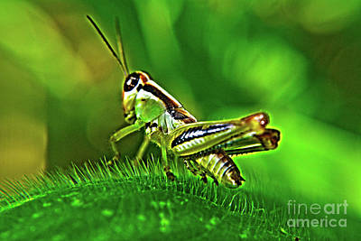 Photograph - Grasshopper by Janice Spivey