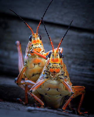 Photograph - Grasshoppers In Love by Mark Andrew Thomas