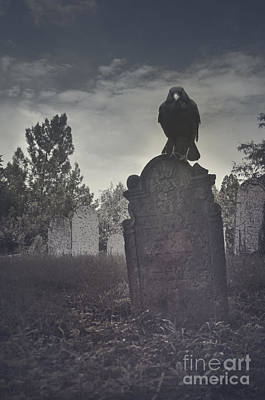 Thanksgiving Art Photograph - Graveyard by Jelena Jovanovic