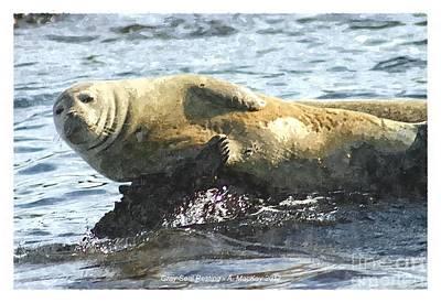 Digital Art - Gray Seal Resting by Art MacKay