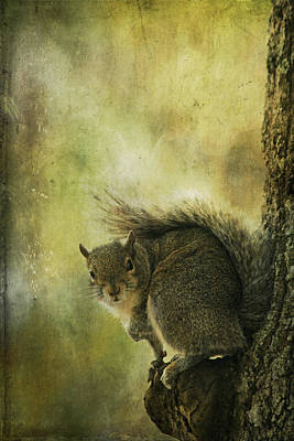Gray Squirrel Art Print