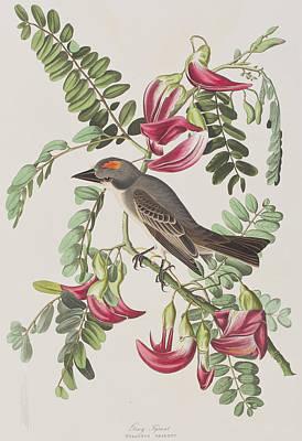 Tyrant Painting - Gray Tyrant by John James Audubon