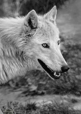 Photograph - Gray Wolf by LeeAnn McLaneGoetz McLaneGoetzStudioLLCcom