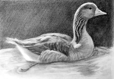 Susan Conner Drawing - Graylag Goose by Susan Conner