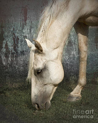 Palomino Horse Photograph - Grazing by Betty LaRue