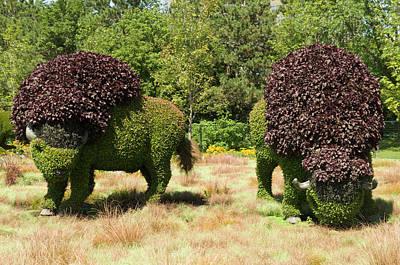 Abstract Animalia - Grazing Buffalo 2 by Bob Corson