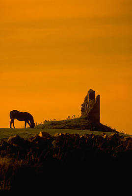 Grazing Horse At At Abby Ruin Art Print by Carl Purcell