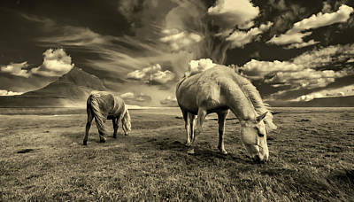 Photograph - Grazing Horses by Pixabay