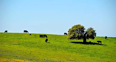 Photograph - Grazing In The Grass by AJ Schibig