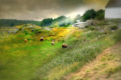 Maine Farms Photograph - Grazing In The Grass by Diana Angstadt
