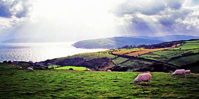 Grazing Sheep County Antrim Print by Thomas R Fletcher