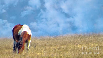 Photograph - Grazing Wild Pony by Dawn Gari