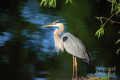Great Blue Art Print by Scott Pellegrin