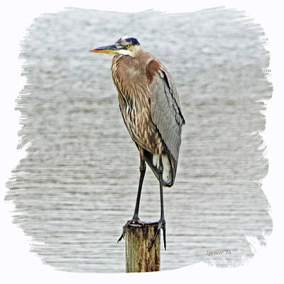 Photograph - Great Blue by T Guy Spencer