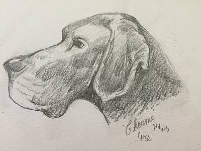 Drawing - Great Dane by Charme Curtin