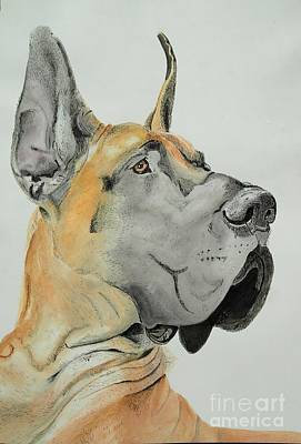 Great Dane Art Print by Lynn Slupski