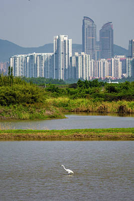 Photograph - Great Egret Shenzhen Skyline Mai Po Hong Kong China by Adam Rainoff