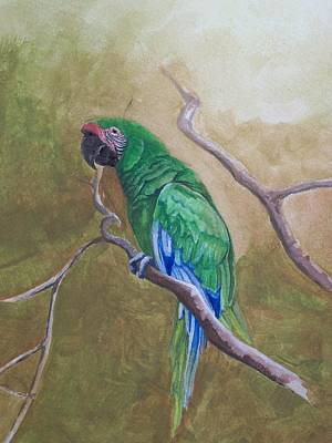 Great Green Macaw Original by William Patterson