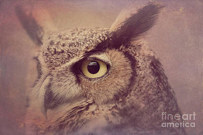 Photograph - Great Horned Owl 4 by Chris Scroggins