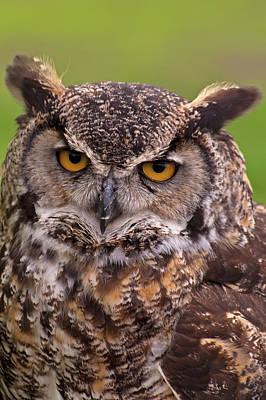 Great Horned Owl Art Print by Alexander Rozinov