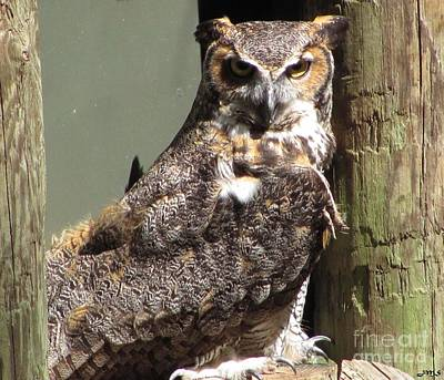 Photograph - Great Horned Owl by Julia Stubbe