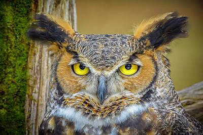 Great Horned Owl Photograph - Great Horned Owl by LeeAnn McLaneGoetz McLaneGoetzStudioLLCcom