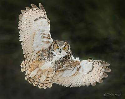 Photograph - Great Horned Owl Wingspread by CR Courson