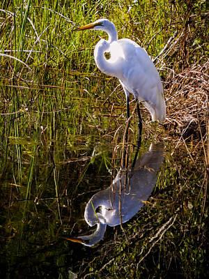 Heron Photograph - Great White Egret by Zina Stromberg