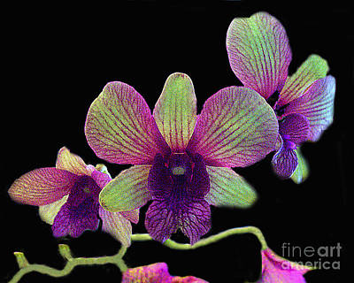 Art Print featuring the photograph Green And Maroon Orchids by Merton Allen