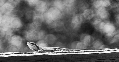 Photograph - Green Anole In Black And White by Randy Bayne