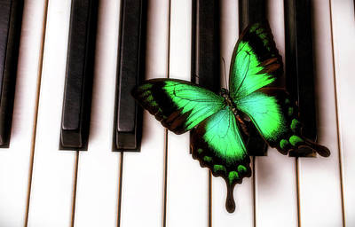 Keyboards Photograph - Green Butterfly On Piano Keys by Garry Gay