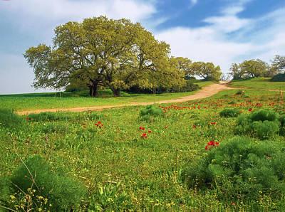 Photograph - Green Fields by Meir Ezrachi