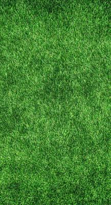 Photograph - Green Grass by Tilen Hrovatic