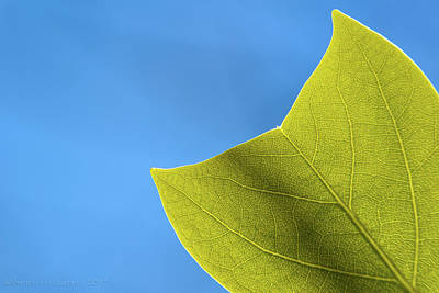 Photograph - Green Leaf by Henri Irizarri