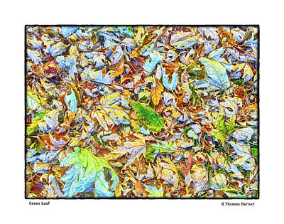 Photograph - Green Leaf by R Thomas Berner