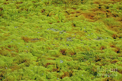 Photograph - Green Moss Background by Patricia Hofmeester
