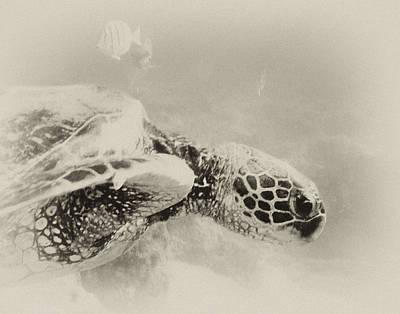 Green Sea Turtle Photograph - Green Sea Turtle by Michael Peychich