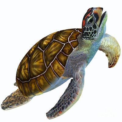 Green Sea Turtle Profile Art Print by Corey Ford