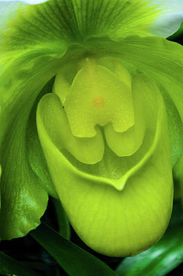 Photograph - Green by Stewart Helberg