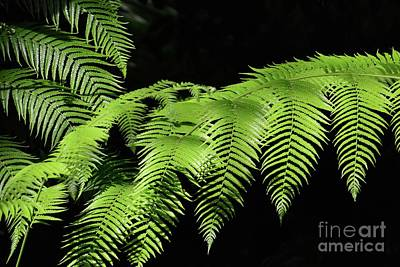 Photograph - Green With Envy by Cindy Manero