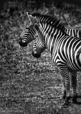 Photograph - Grevys Zebra by LeeAnn McLaneGoetz McLaneGoetzStudioLLCcom