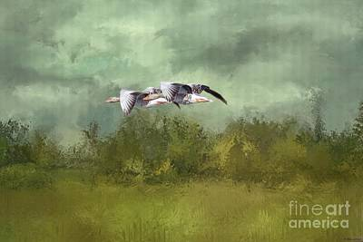 Photograph - Grey Geese Flying by Eva Lechner