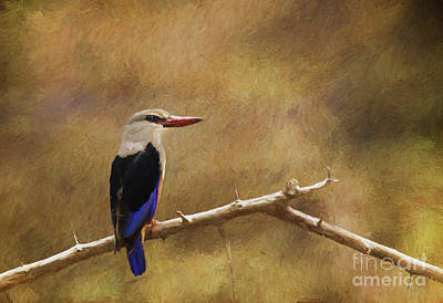 Digital Art - Grey-headed Kingfisher  Halcyon Leucocephala by Liz Leyden