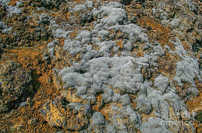 Photograph - Grey Moss  by Patricia Hofmeester